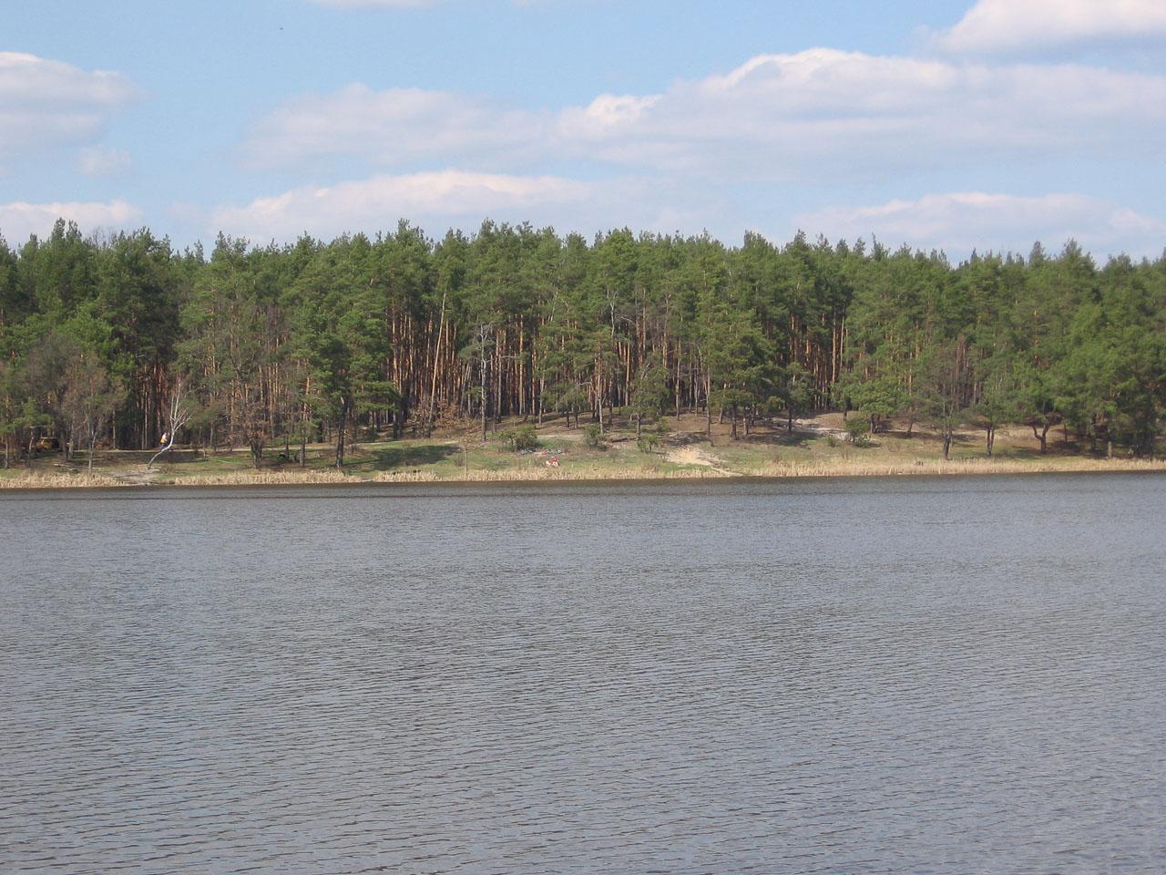 Ліс за озером