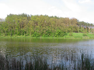 Озеро і ліс