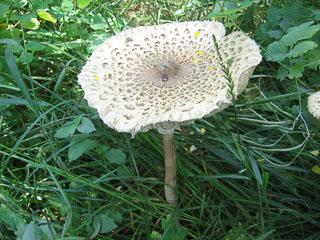 Мега-гриб