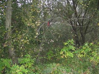 Черевик на дереві