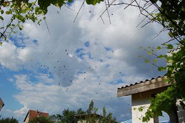 Пташки