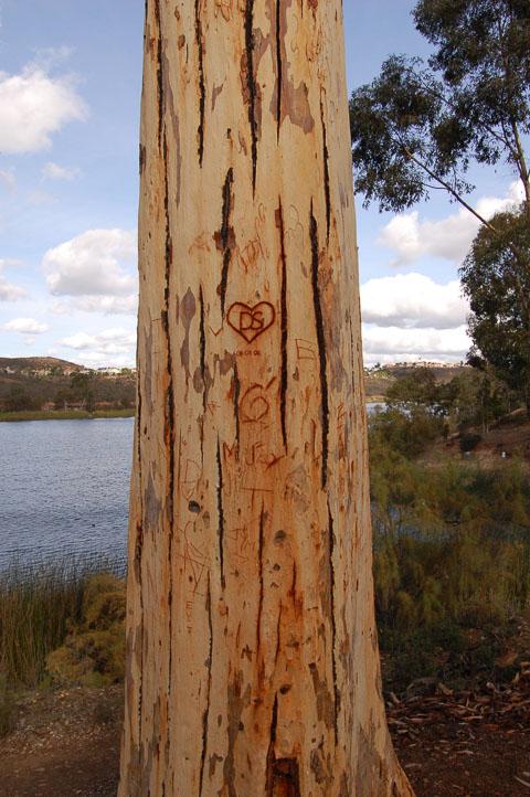 І тут на деревах пишуть