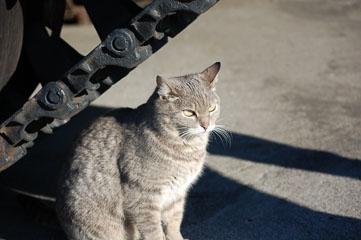 Дуже злий кіт