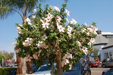 Дерево з квітками