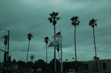 Пальми та прапори