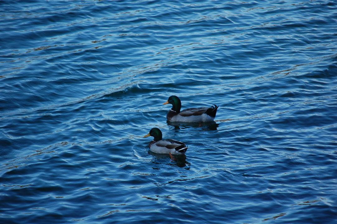 2 качки