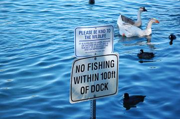 «Рибу не ловити!»