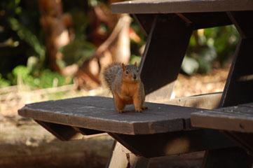 Balboa Park – Білка