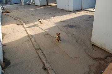 Собаки на базарі