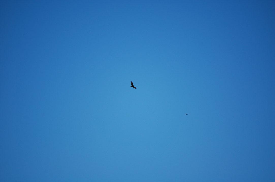 Вільний птах