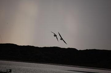 Птахи
