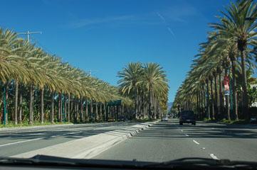Пальмова алея