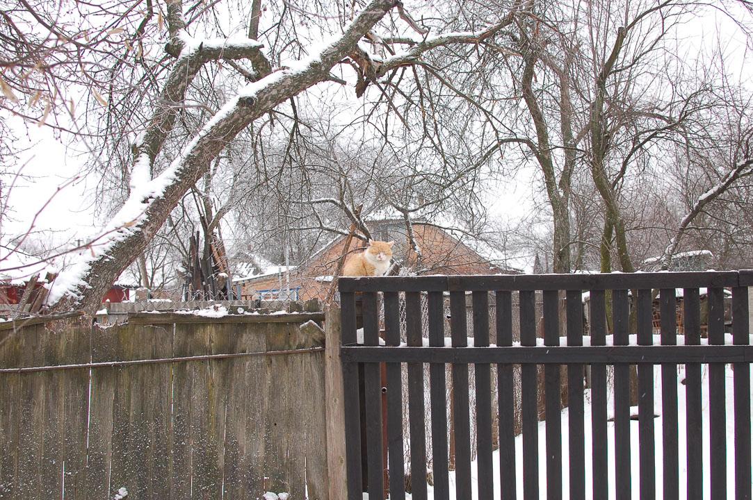 Кіт дрімає на паркані
