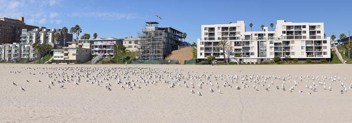 Птахи на пляжі