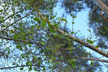 Дерева зеленіють