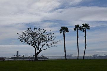 Дерево та пальми