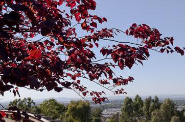 Червоне листя