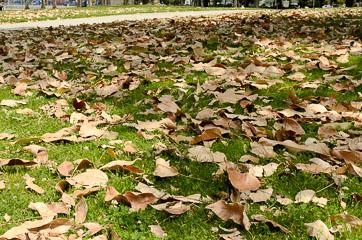 Пожовкле листя