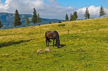 Кінь на полонині