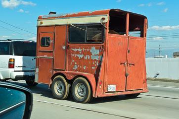 Перевезення коней