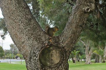 Білка на дереві