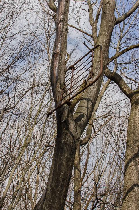 Вросло в дерево