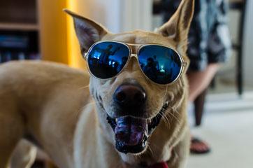 Пес в окулярах