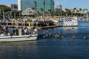 Пелікани зустрічають рибалок