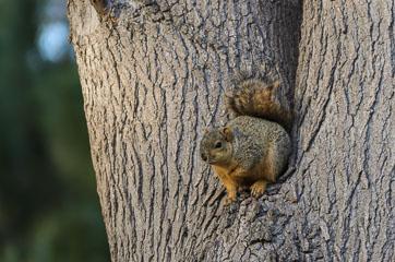 Mile Square Regional Park – Білка