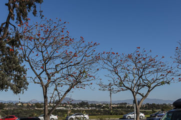 Дерева квітнуть