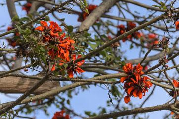 Квітки