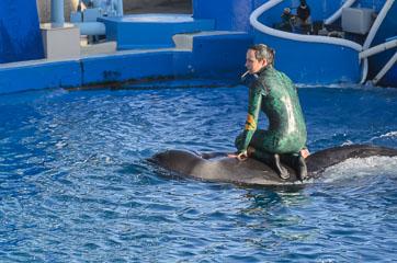 Дельфіни і тренер