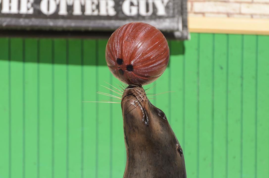 Тримає м'яч