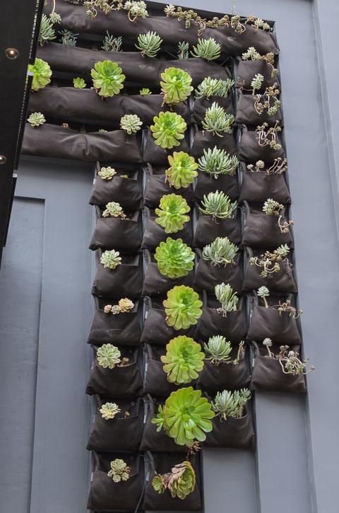 Рослини на стіні