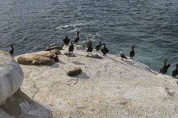 Морські котики та птахи