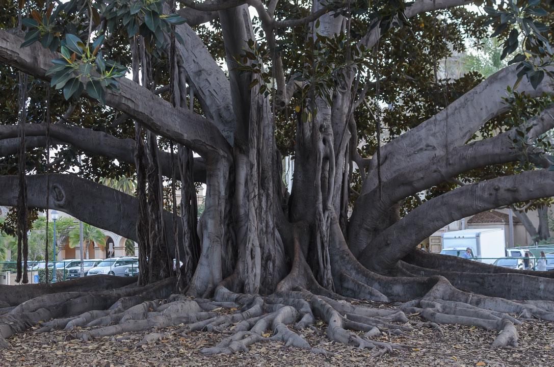 Старе дерево