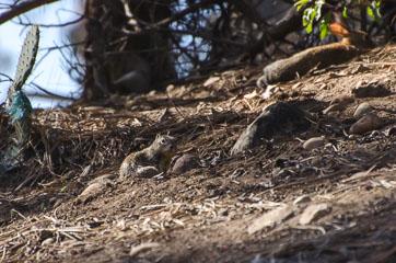 Білка та заєць