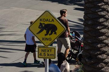 Увага, коали!