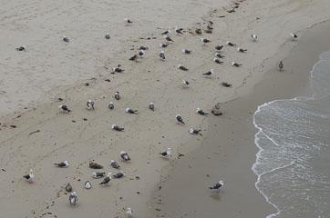 Чайки окупували пляж