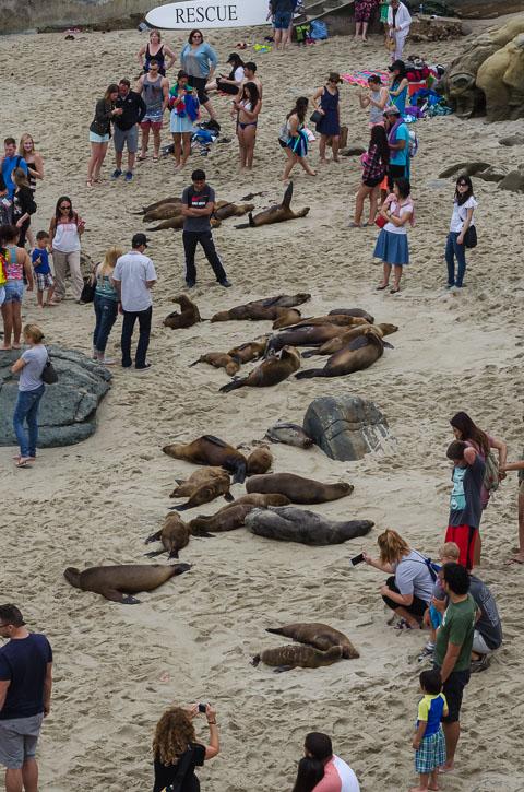 Морські та інші ссавці