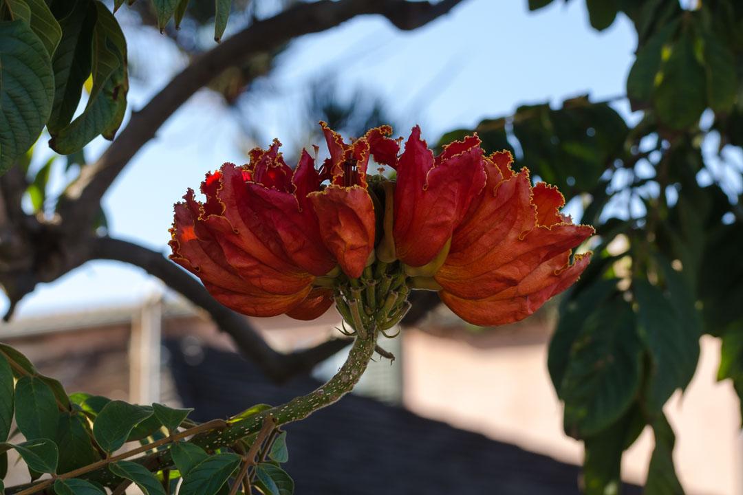 Квітка