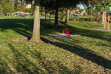 Розташувалися під деревами