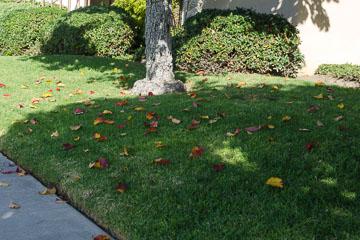 Жовте листя