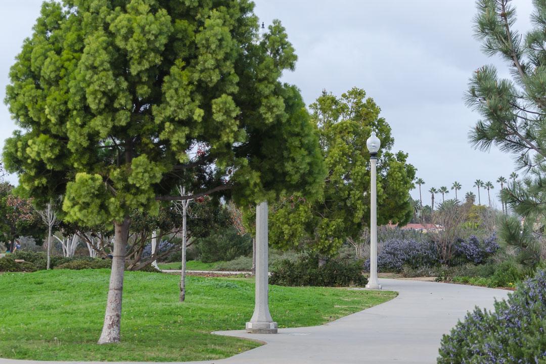 Дерева
