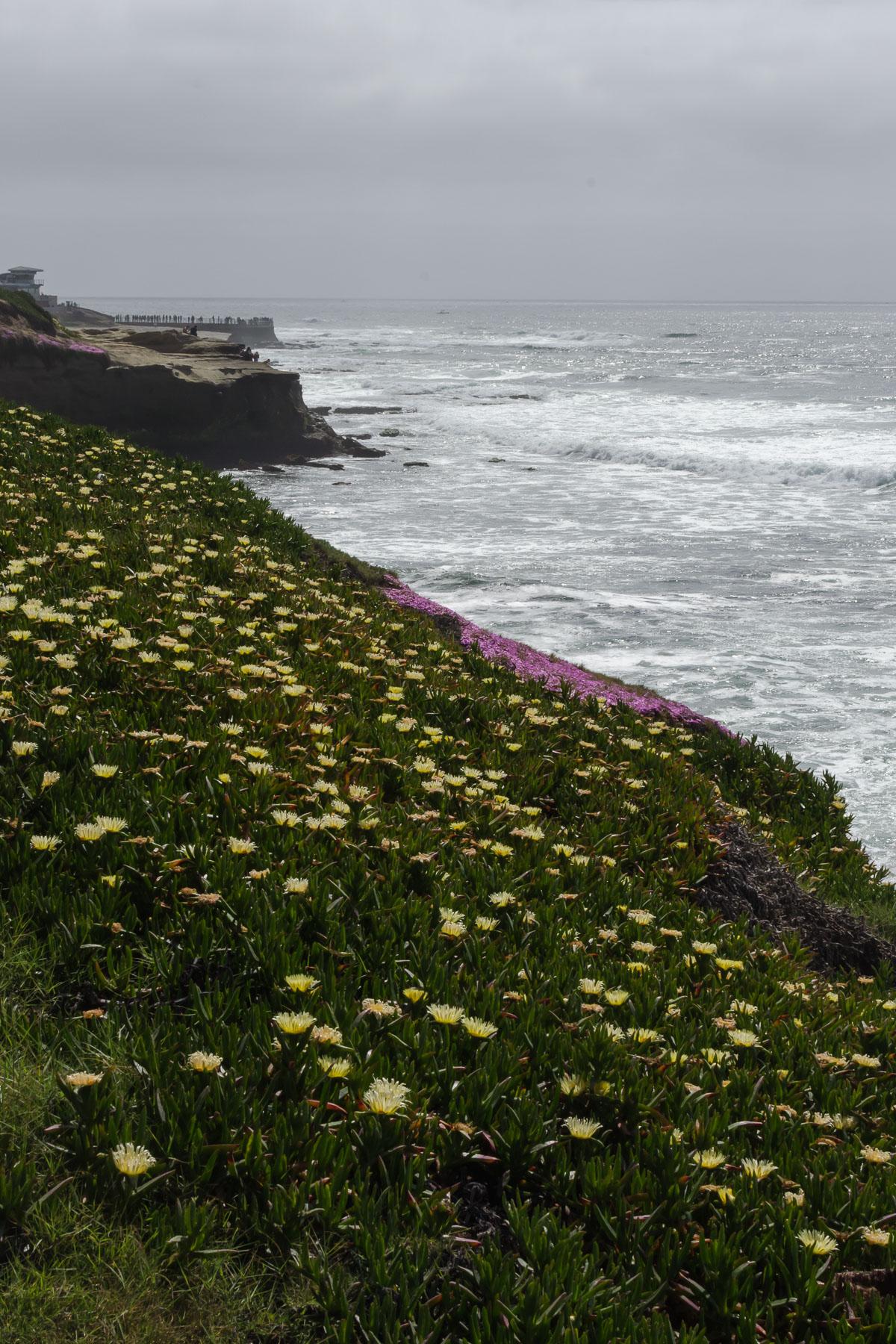 Квіти біля океану