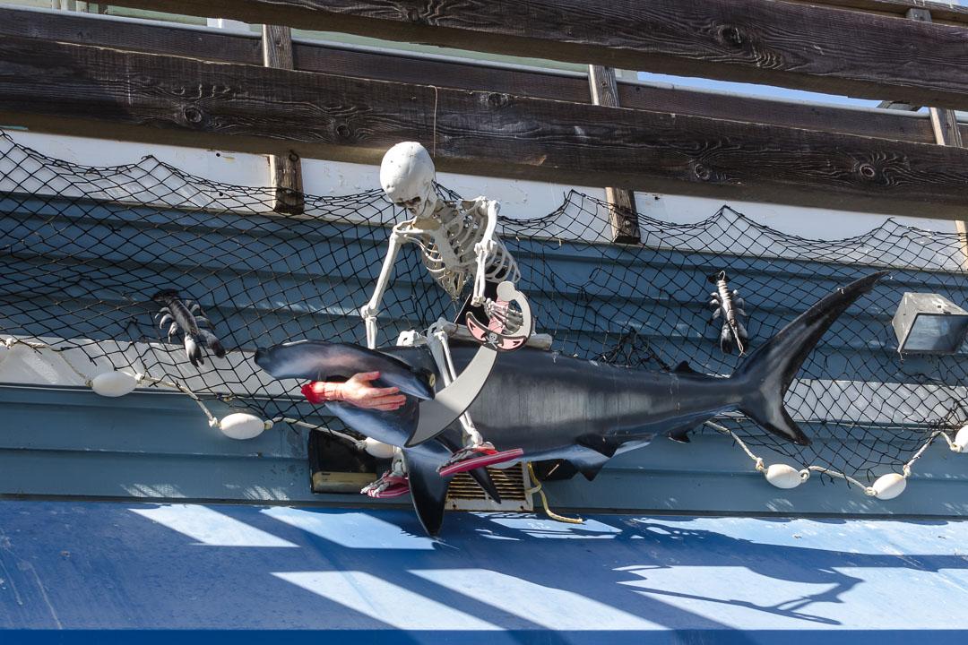 Скелет та акула