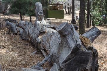 Спиляне дерево