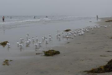 La Jolla Shores – Птахи